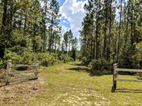Hunting And Timber Near Tallahassee : Monticello : Jefferson County : Florida