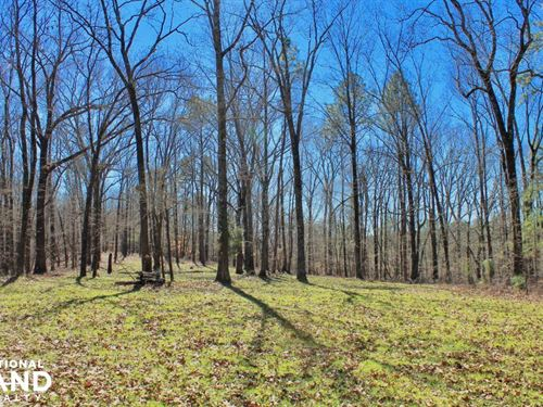 The Longleaf Ridge Tract : Vincent : Shelby County : Alabama