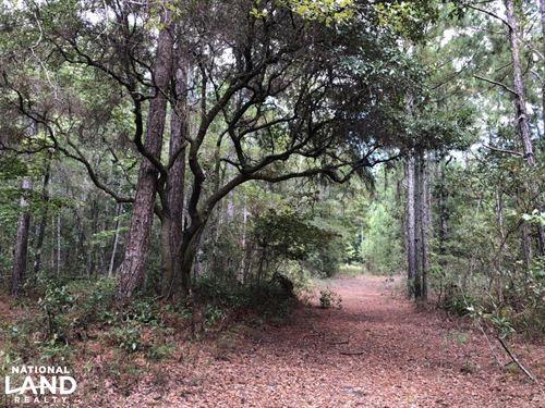 Gillisonville Firetower Recreationa : Ridgeland : Jasper County : South Carolina