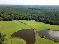 The Durbin Homeplace Farm 175+/- Ac : Clanton : Chilton County : Alabama