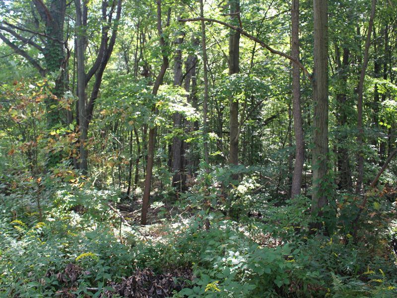 Hunting Grounds With Creek : Bangor : Van Buren County : Michigan