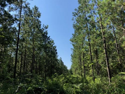 118 Acres / Carter Road : Bogalusa : Washington Parish : Louisiana