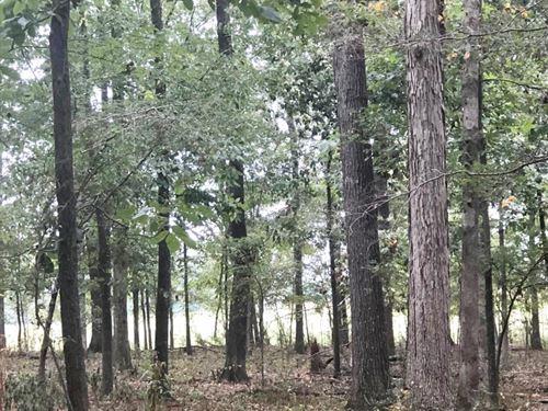 East Fork Anderson Creek Farm & Tim : Anderson : Lauderdale County : Alabama