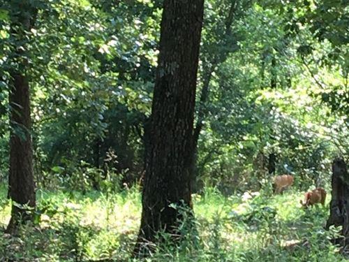 Up to 60 Acres Bordering Ouachita : Pine Ridge : Montgomery County : Arkansas