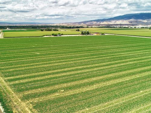 Southwest Irrigated Farmland : Delta : Colorado