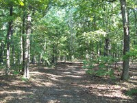 20 Acres Timber Property : Piedmont : Wayne County : Missouri