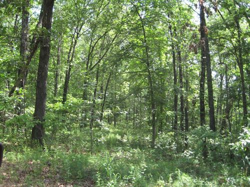 Vacant Land, 5.68 Surveyed Acres : Versailles : Morgan County : Missouri