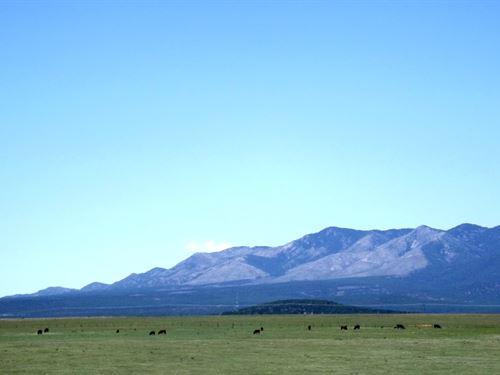 Central New Mexico Grass Land 155 : Estancia : Torrance County : New Mexico
