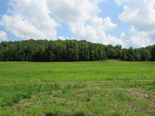 5.41 Acres Beautiful Land Perry : Lobelville : Perry County : Tennessee