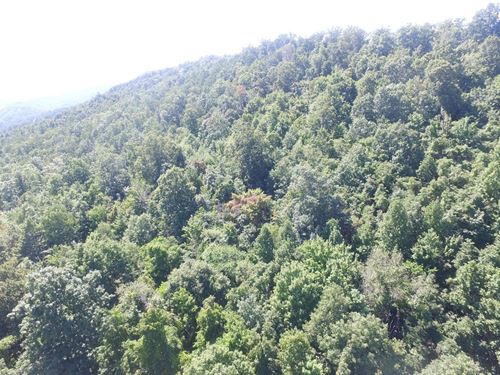 Lot Norris Lakefront Subdivision : New Tazewell : Claiborne County : Tennessee