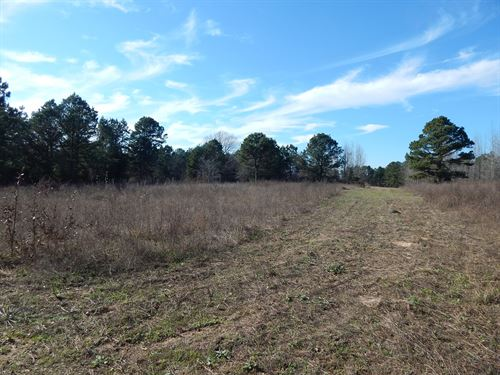 Recreational Hunting Investment : Diana : Upshur County : Texas