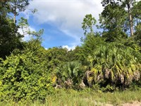 5 Acres Wooded 776399 : Chiefland : Levy County : Florida