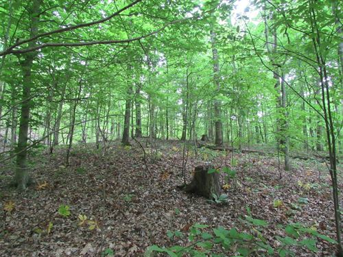 3.2 Acres Unrestricted Vacant Land : Linden : Perry County : Tennessee