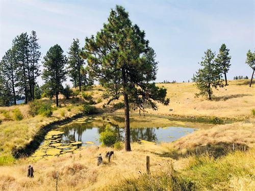 Build Your Dream Home Acreage : Kamiah : Idaho County : Idaho