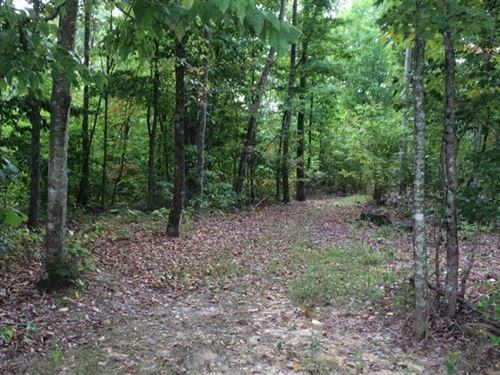 Reduced Price, Must See, 44 Acres : Liberty : Casey County : Kentucky