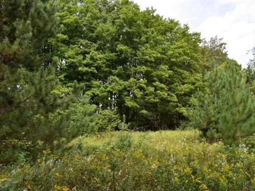 Northern MI Hunting Property : Atlanta : Montmorency County : Michigan