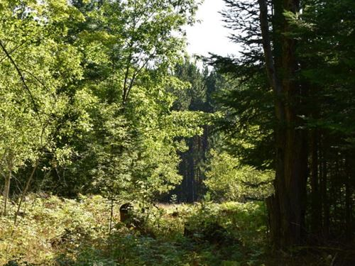 Hunting Acreage Near Hillman MI : Hillman : Montmorency County : Michigan