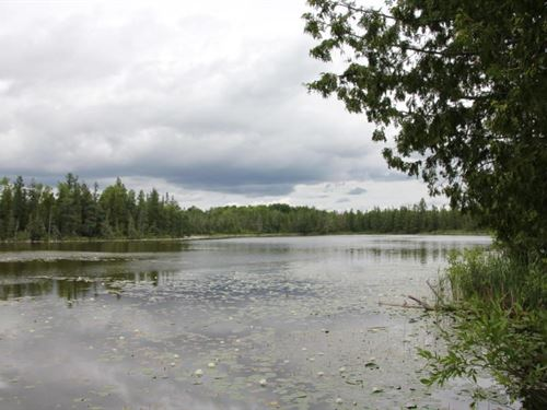 Cabins Private Lake 87 Acres Onaway : Onaway : Presque Isle County : Michigan