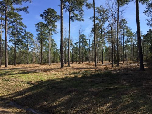 Beaufort County NC Water Access Lot : Belhaven : Beaufort County : North Carolina