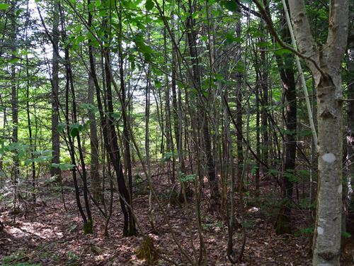 Timberland Lot Mount Chase, Maine : Mount Chase : Penobscot County : Maine