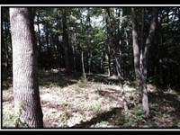 Tract 7 At The Woods At Cohagen : Logan : Hocking County : Ohio