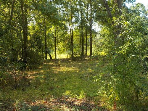 Gently Sloping Lot : Hattiesburg : Forrest County : Mississippi