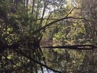 Prime Land Homosassa Springs, Fl : Homosassa Springs : Citrus County : Florida