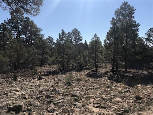 Great Lot Building Site Heron Lake : Rutheron : Rio Arriba County : New Mexico