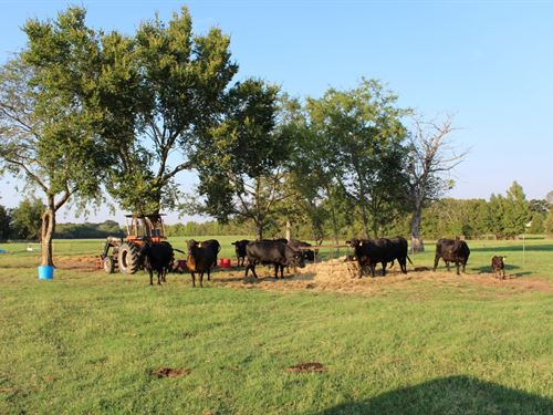 80 East Texas Acres, Working Cattle : Quitman : Wood County : Texas
