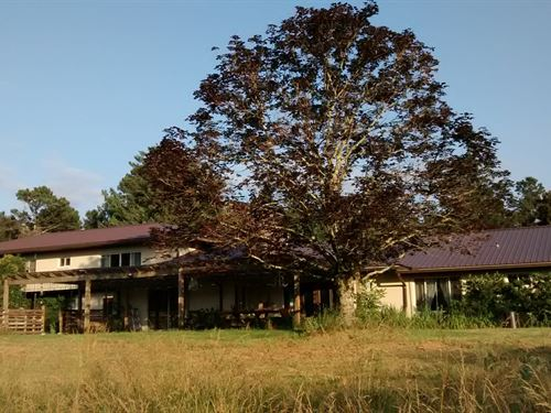 Nature Preserve, Mid-Century Home : Mount Airy : Habersham County : Georgia