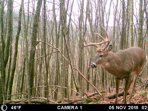 Affordable Hunting Land : Viola : Richland County : Wisconsin
