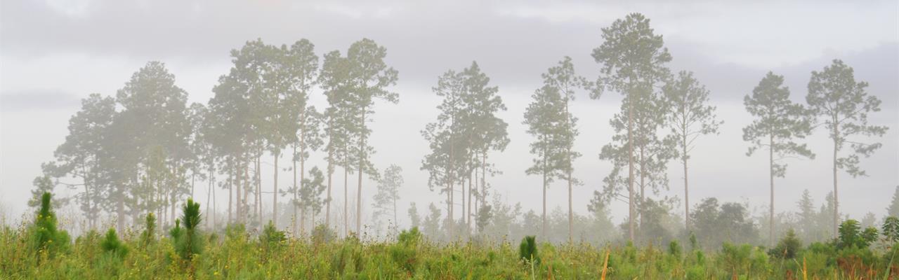 Tremendous Hunting/Wildlife Viewing : Allen Parish : Allen Parish : Louisiana