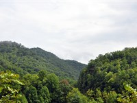 Prime Hunting / Timberland : Marytown : McDowell County : West Virginia