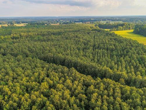 Timberland Auction, 403 Acres 12 : Dutton : Jackson County : Alabama