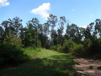 74.10 Acres Gr : Pelzer : Greenville County : South Carolina