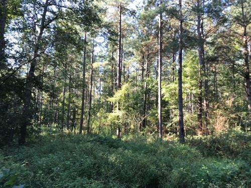 81 Acres Of Prime Timberland In Ami : Smithdale : Amite County : Mississippi
