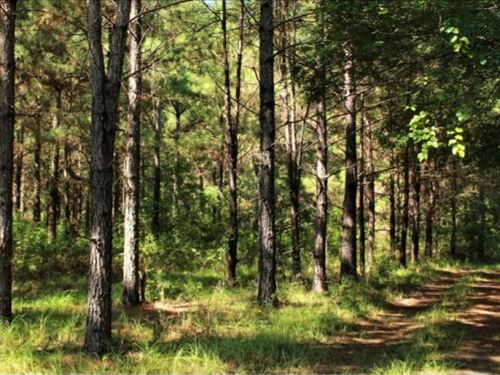 104 Acres In Walthall County, Ms : Tylertown : Walthall County : Mississippi