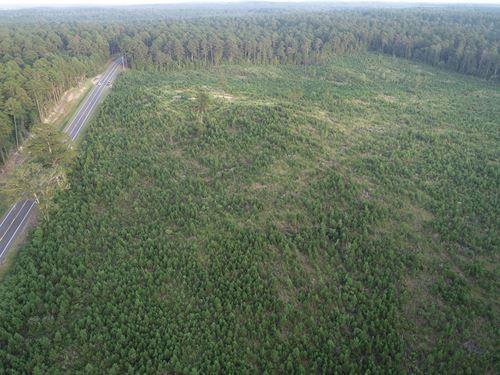 Young Pine Timberland Ouachita : Chidester : Ouachita County : Arkansas