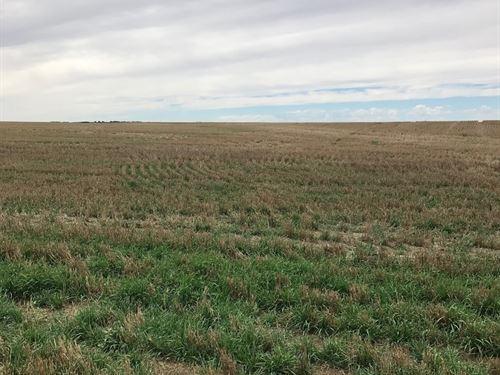 Kit Carson County Farmland For Sale : Flagler : Kit Carson County : Colorado
