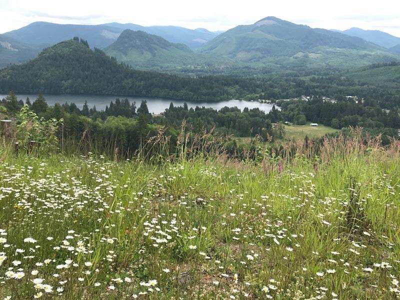 Mineral Lake : Mineral : Lewis County : Washington