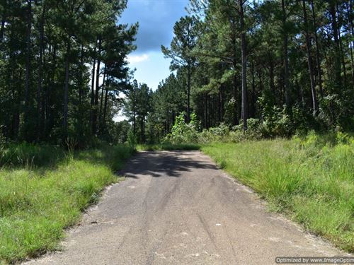 Timber Tract : Braxton : Simpson County : Mississippi