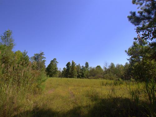 100 Acre Hunting Property : Nunnelly : Hickman County : Tennessee