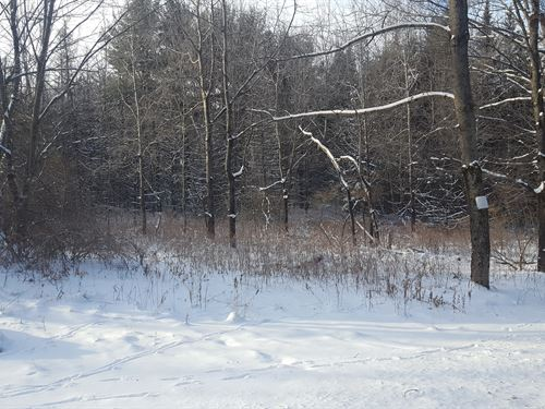 46 Ac+/- With Pond : Smyrna : Chenango County : New York