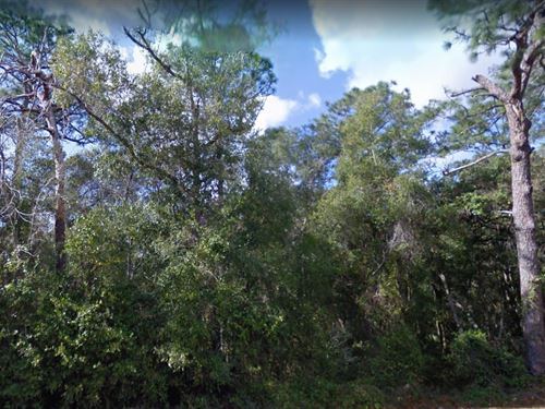 Marion County, Fl $10,000 : Silver Springs : Marion County : Florida