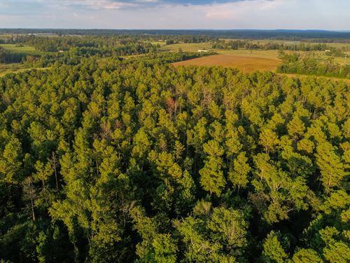 Live Timberland Auction, 403 Acres : Dutton : Jackson County : Alabama
