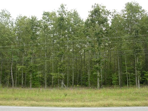 Timberland Auction 403 Acres 6 12 : Dutton : Jefferson County : Alabama