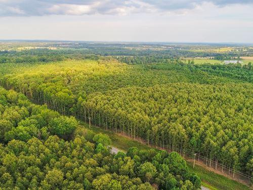 Timberland Auction 403 Acres 10 12 : Dutton : Jackson County : Alabama