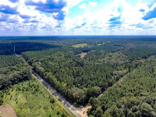 Timber, Hardwoods, Planted Pines : Little Texas : Macon County : Alabama
