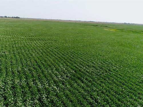 80 Acres In Sanborn County Sd : Letcher : Sanborn County : South Dakota