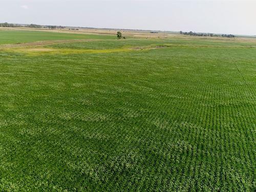 131.49 Acres In Sdanborn County Sd : Letcher : Sanborn County : South Dakota